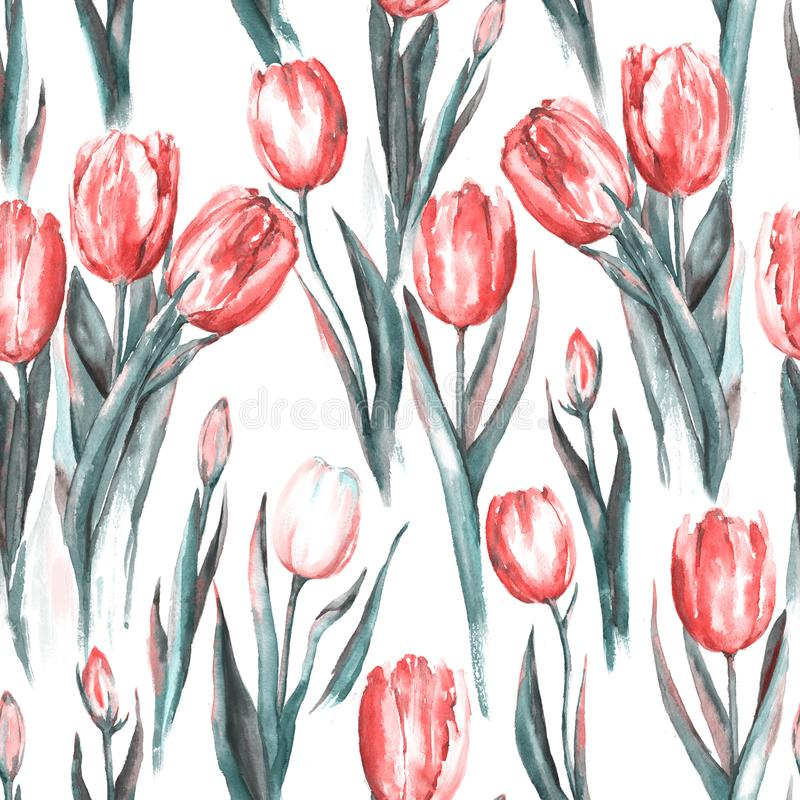 Watercolor seamless pattern with red and white tulip flowers. Hand-drawn watercolor seamless pattern with red and white tulip flowers. Repeated spring print for royalty free illustration