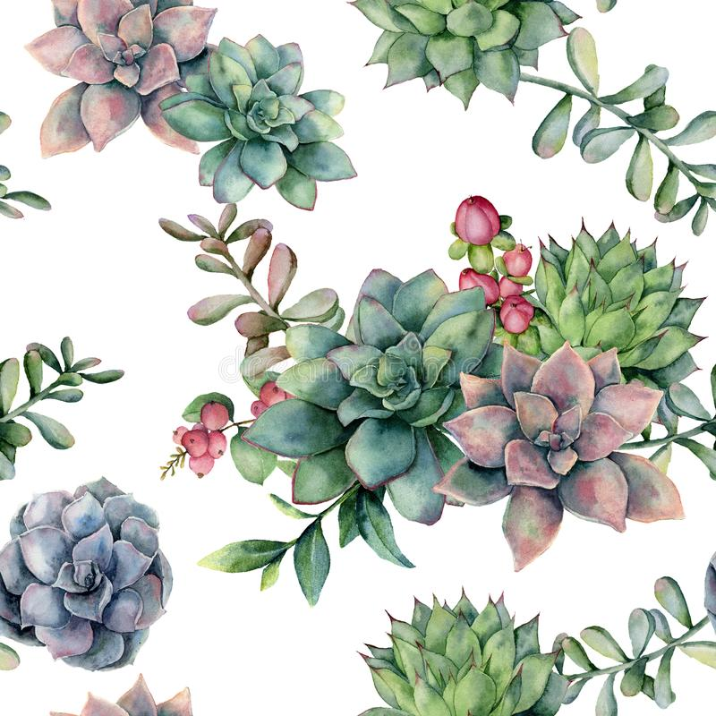 Watercolor seamless pattern with succulent bouquet and red berries. Hand painted flowers, branch and hypericum isolated royalty free illustration