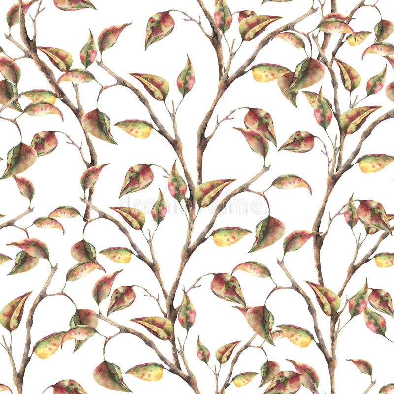 Watercolor seamless pattern with tree branch with autumn leaves. Hand painted autumn ornament isolated on white royalty free illustration