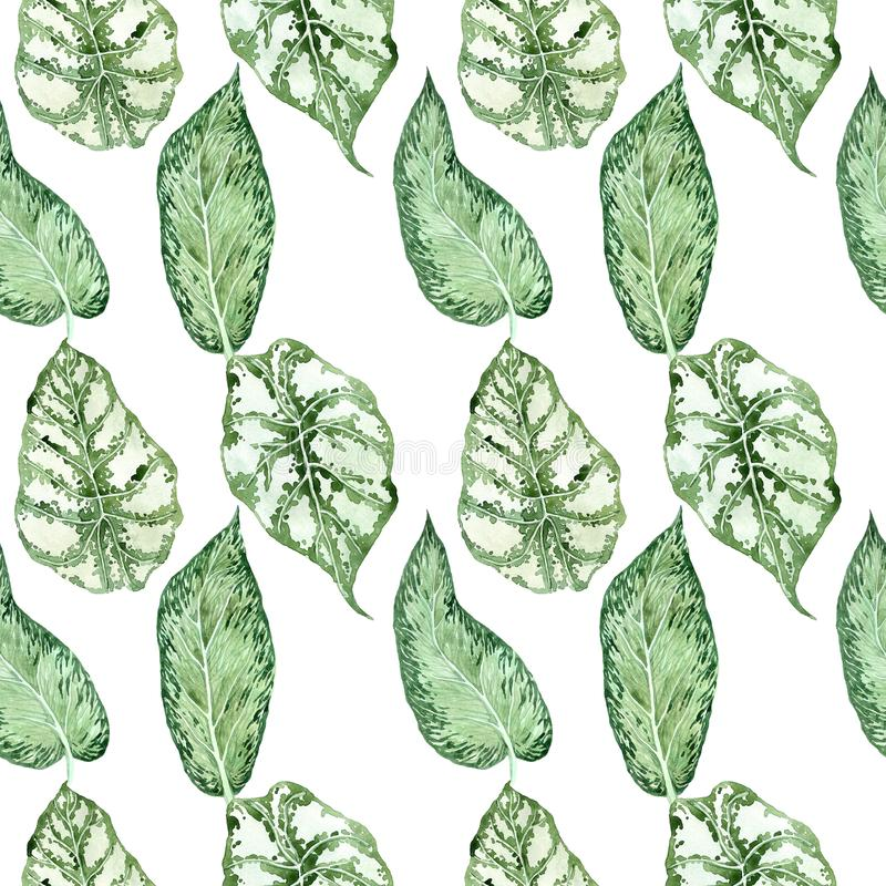 Watercolor seamless pattern with tropical leaves and houseplants leaves. Greenery. Succulent. Floral Design element. Perfect for invitations, cards, prints royalty free illustration