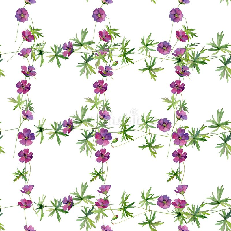 Watercolor seamless pattern of wild geranium flowers royalty free stock photo
