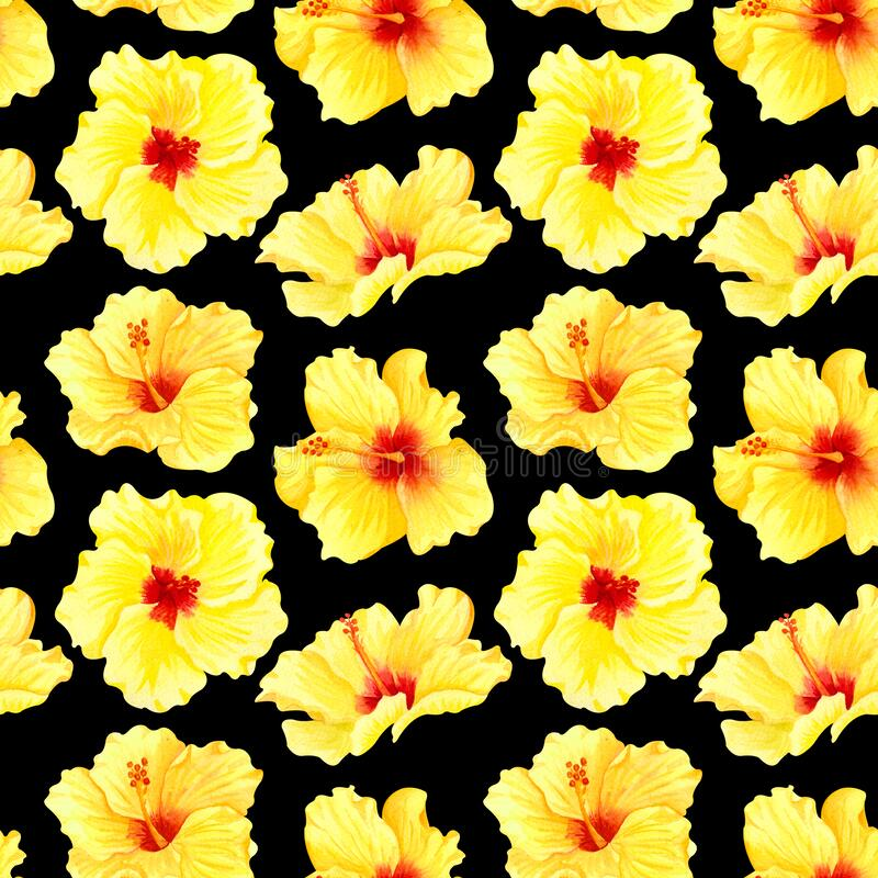 Watercolor seamless tropical floral pattern. Big yellow hibiscus on black background. Hand drawn watercolor seamless pattern with. Yellow tropical flowers stock illustration