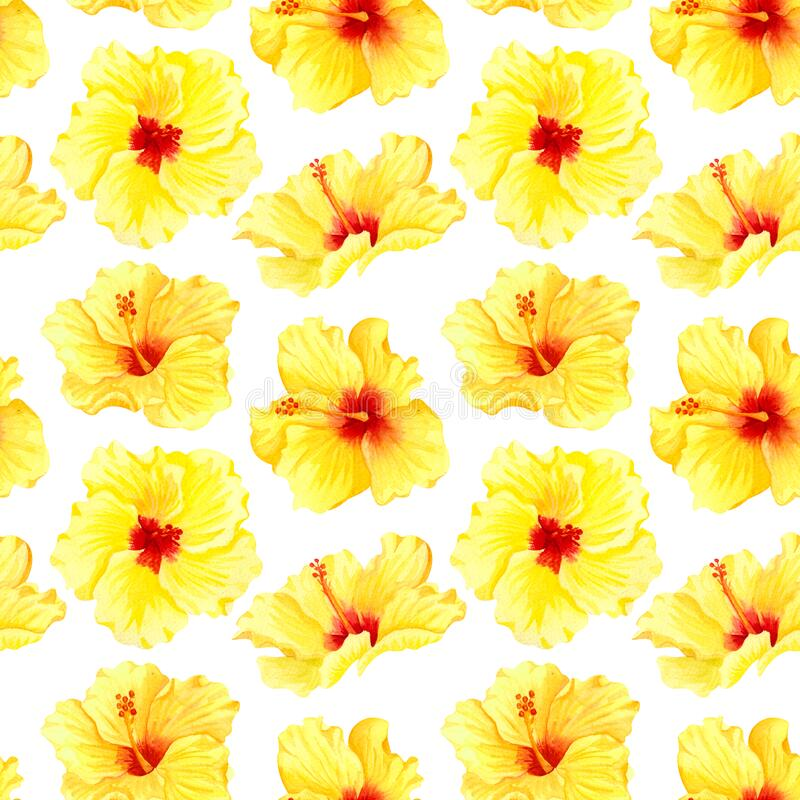 Watercolor seamless tropical floral pattern. Big yellow hibiscus on white background. Hand drawn watercolor seamless pattern with. Yellow tropical flowers vector illustration