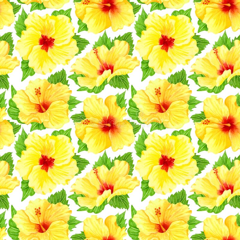 Watercolor seamless tropical floral pattern. Yellow hibiscus and leaves on white background. Hand drawn watercolor seamless. Pattern with yellow tropical vector illustration