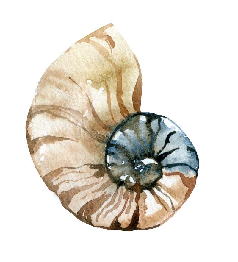 Download Watercolor seashell stock illustration. Illustration of pelagic - 69137738