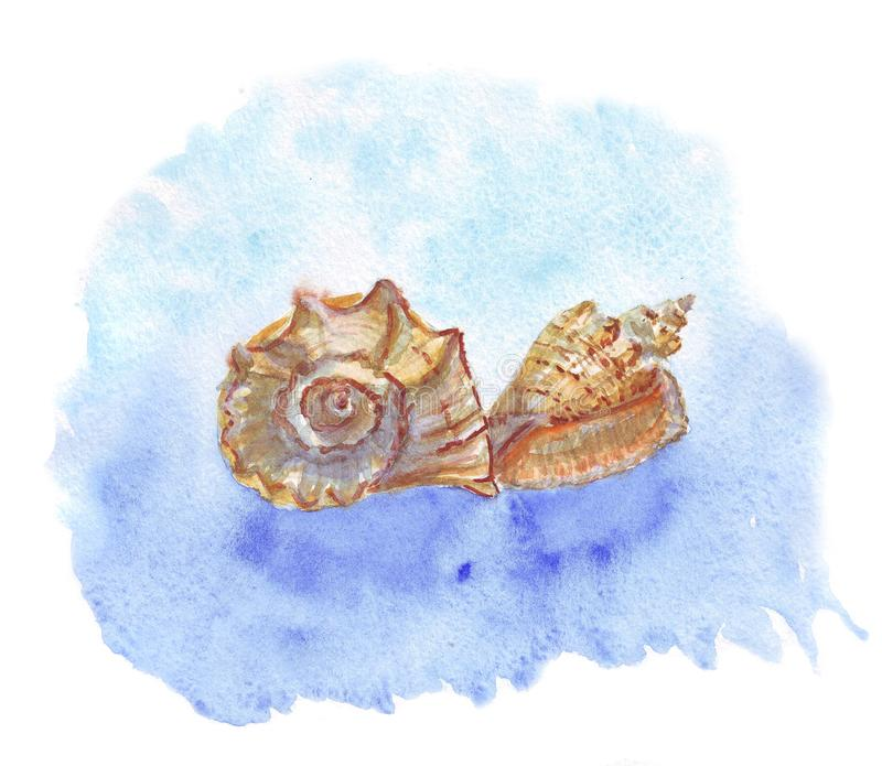 Watercolor of seashells on a blue watercolor spot vector illustration