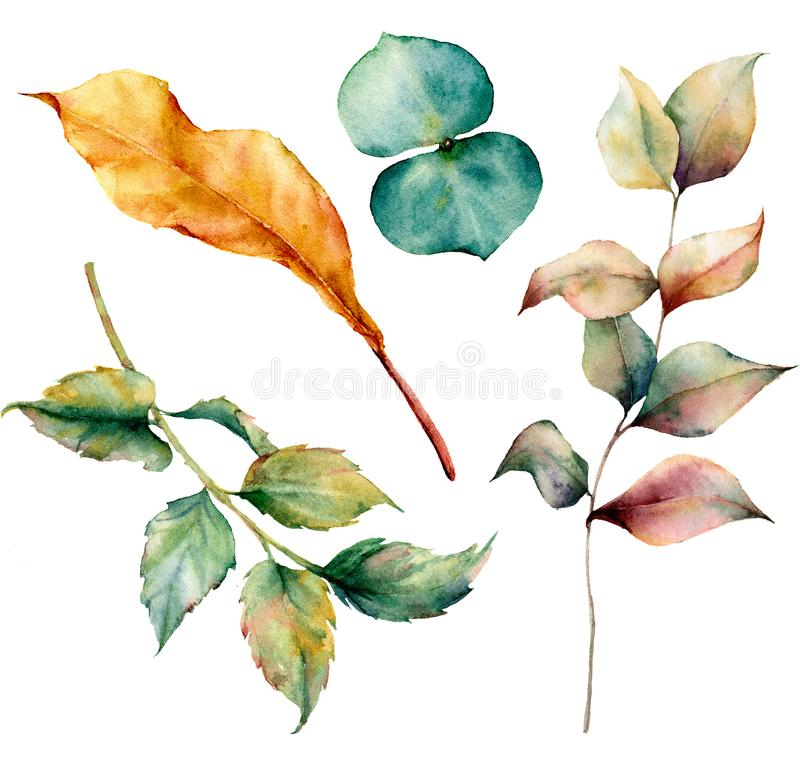 Watercolor set with autumn leaves and grass branch. Hand painted grass and dogrose branch, eucaliptus and yellow leaves vector illustration