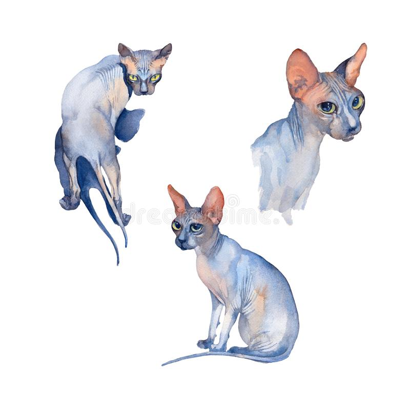 Watercolor set of Blue Sphynx Cat with green eyes attentive looking on a white background. Set of Blue Sphynx Cat with green eyes attentive looking on a white vector illustration