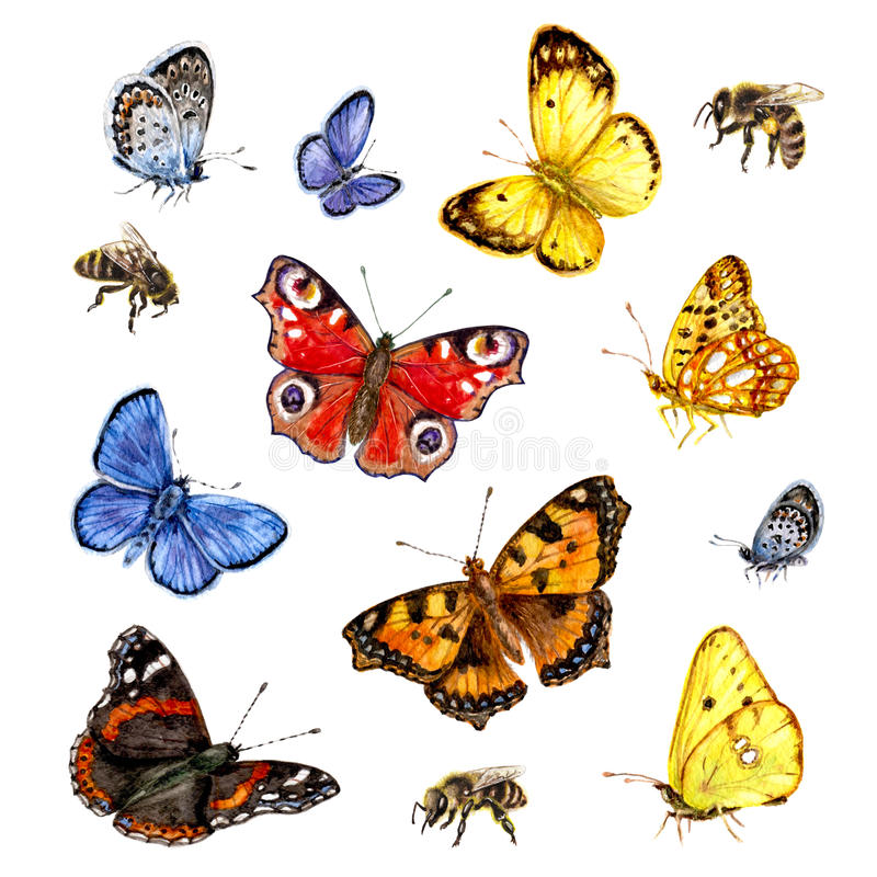 Watercolor set of butterflies and bees. royalty free illustration