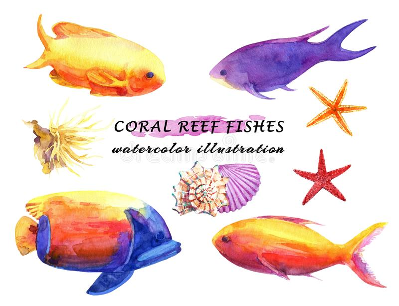 Watercolor set of colorful reef fishes, soft coral, starfish and molluscs. vector illustration
