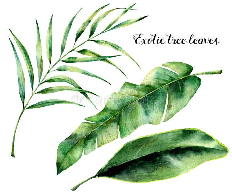 Watercolor set with exotic tree leaves. Hand painted palm branch and leaf of magnolia. Tropic plant isolated on white stock illustration