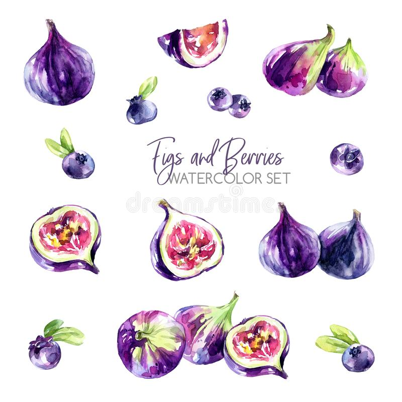 Watercolor borders set with flowers, figs and berries. Original hand drawn illustration in violet shades. Fresh summer. Watercolor set with figs and berries vector illustration