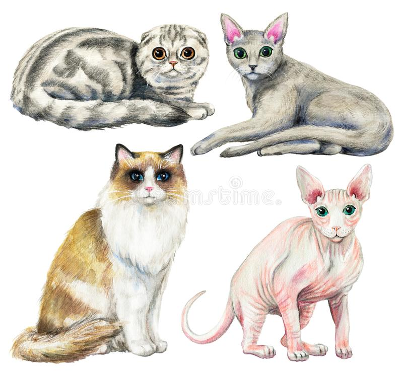 Watercolor set with four different breeds of cats stock illustration