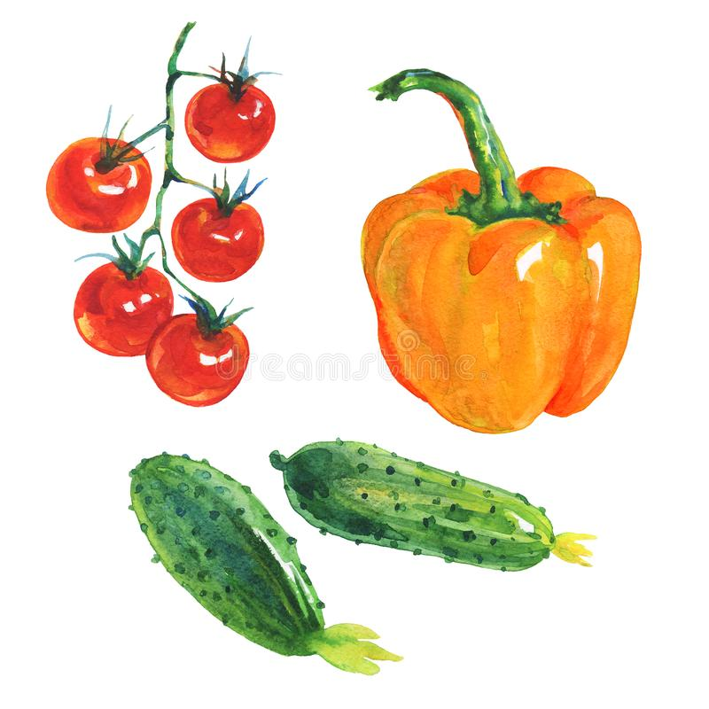 Watercolor paprika, cucumbers, tomatoes stock illustration