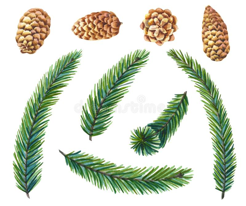Watercolor set of green pine on white background.Fir branches with cones Christmas tree royalty free illustration