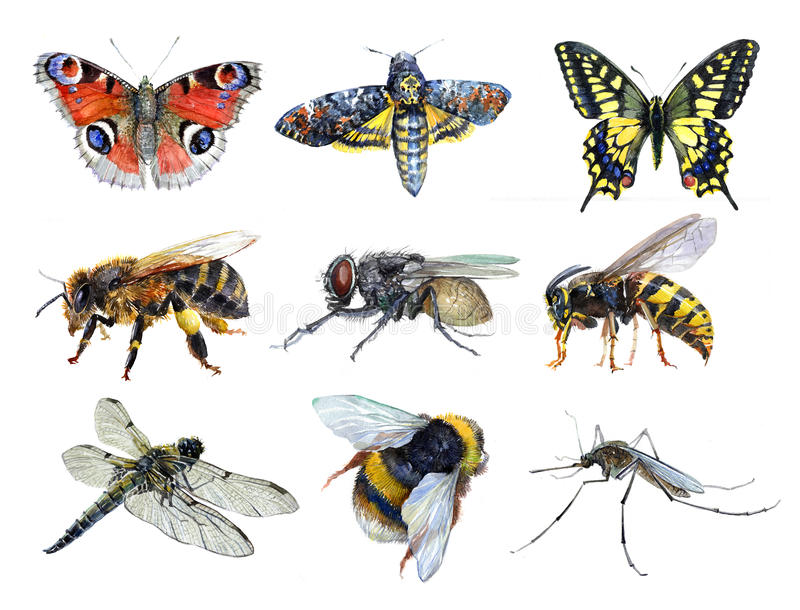 Watercolor set of insect animals wasp, moth, mosquito, Machaon, fly, dragonfly, bumblebee, bee, butterfly isolated stock illustration