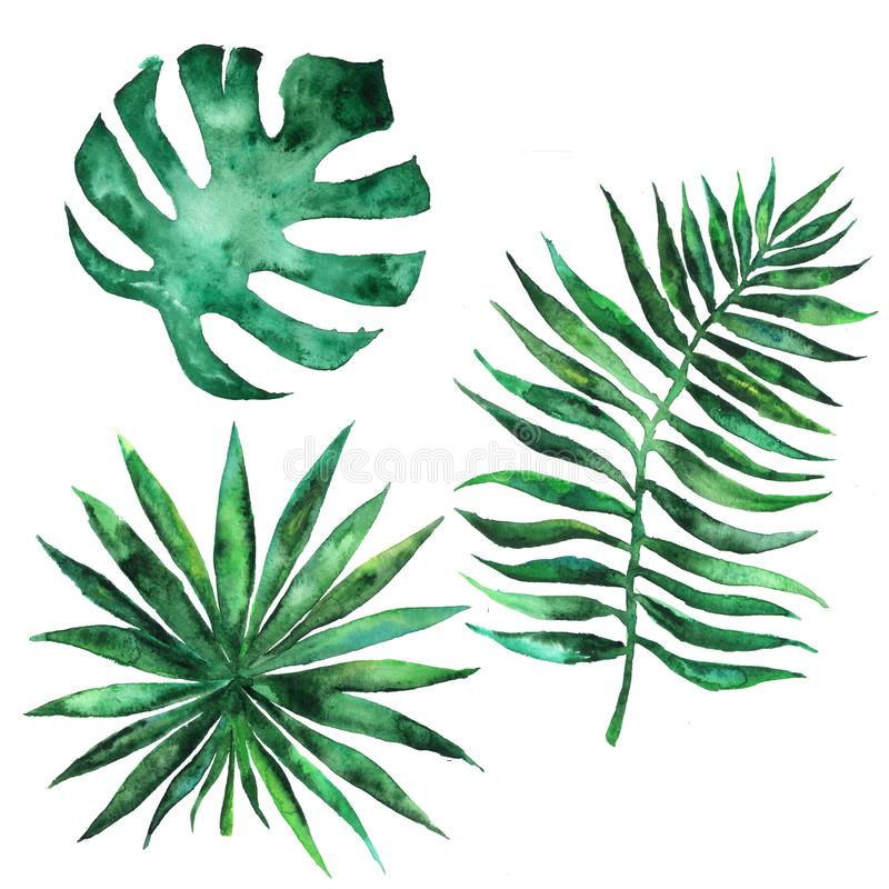 Watercolor set of leaves of tropical exotic plants, trees. Palms royalty free stock photography