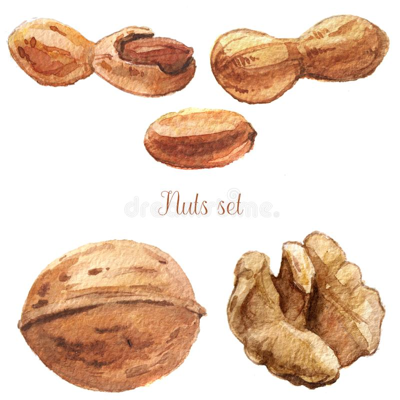 Watercolor nuts set royalty free illustration