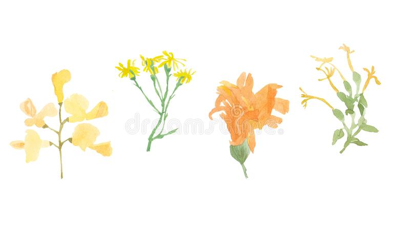 Watercolor set of Orange and yellow wild flowers stock photo