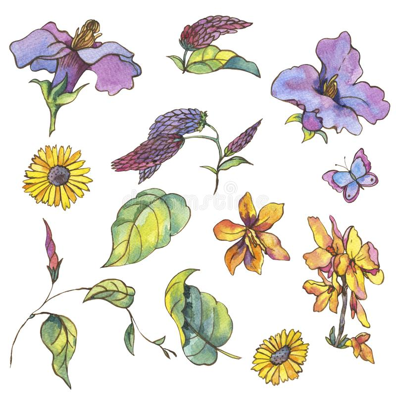 Watercolor set of purple yellow wildflowers, curls and butterflies, royalty free illustration