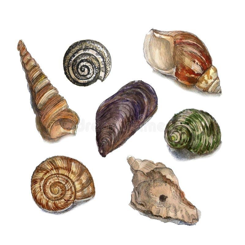 Watercolor illustrations of shells stock photo