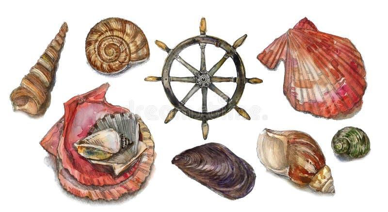 Watercolor set with seashells stock photography