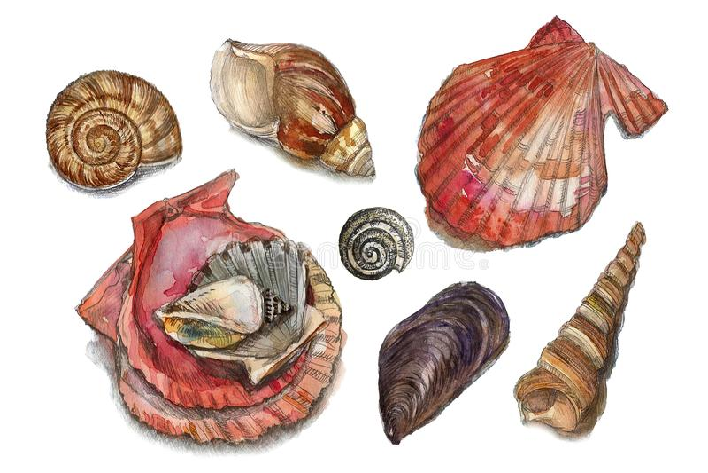 Watercolor set of seashells royalty free stock photos