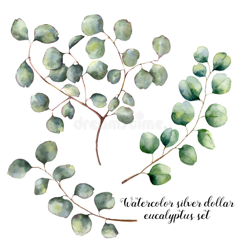 Watercolor set with silver dollar eucalyptus. Hand painted floral illustration with round leaves and branches isolatedon stock illustration