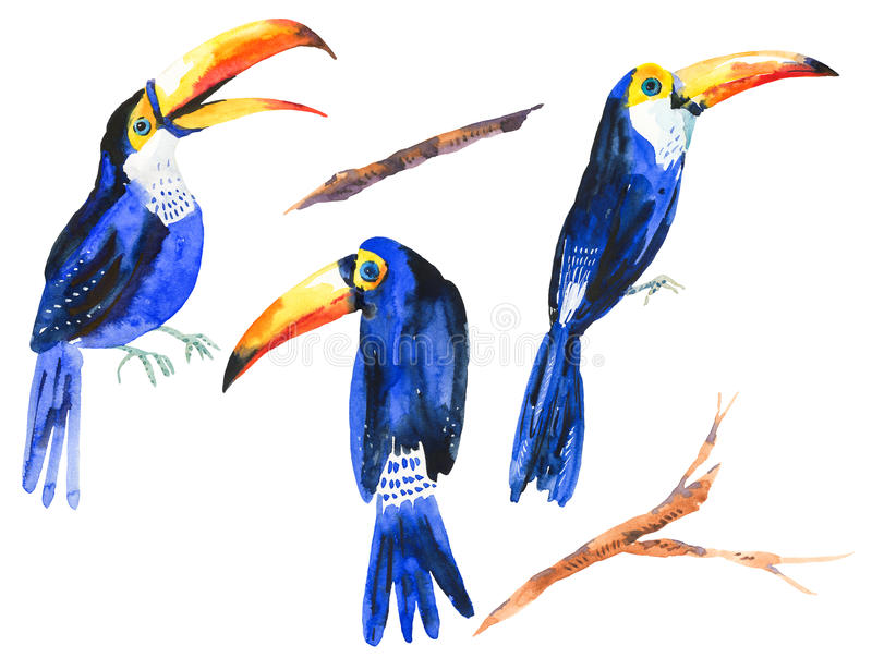 Watercolor set of tropical birds Toucans stock illustration