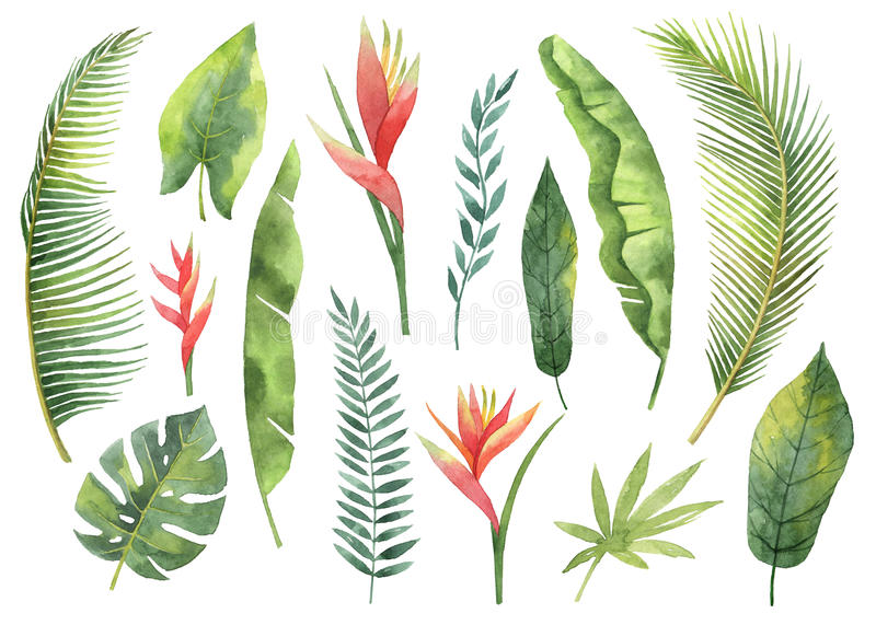Watercolor set tropical leaves and branches isolated on white background. royalty free illustration