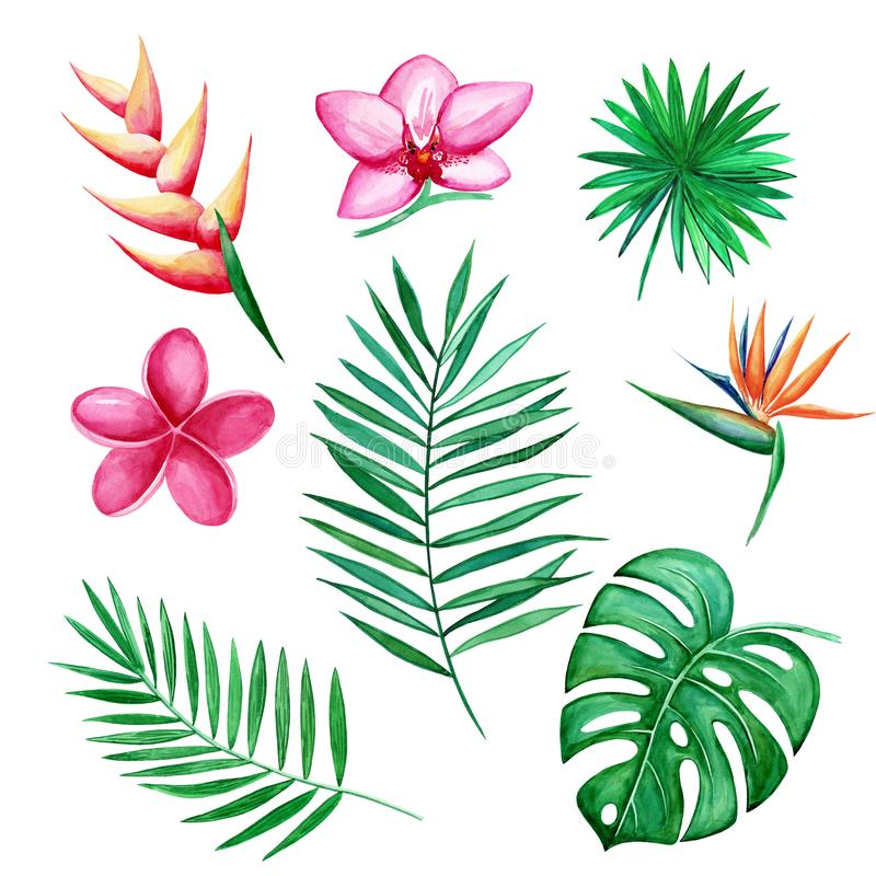 Watercolor set of Tropical leaves and flowers isolated elements on white background. Hand-drawn illustration stock illustration