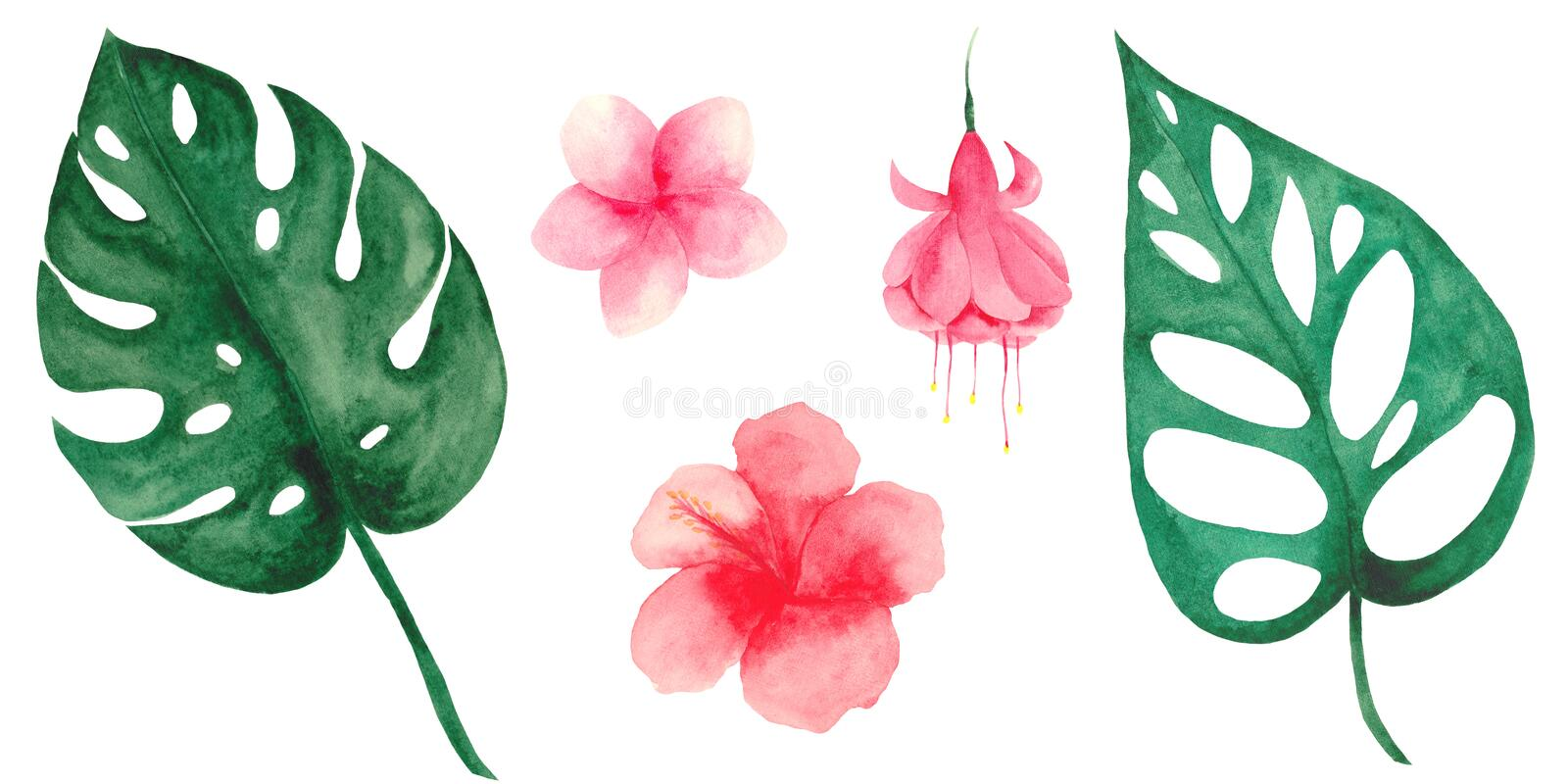 Watercolor set with tropical leaves and flowers. Monstera leaves and palm trees. Frames of tropical leaves and pink flowers stock illustration