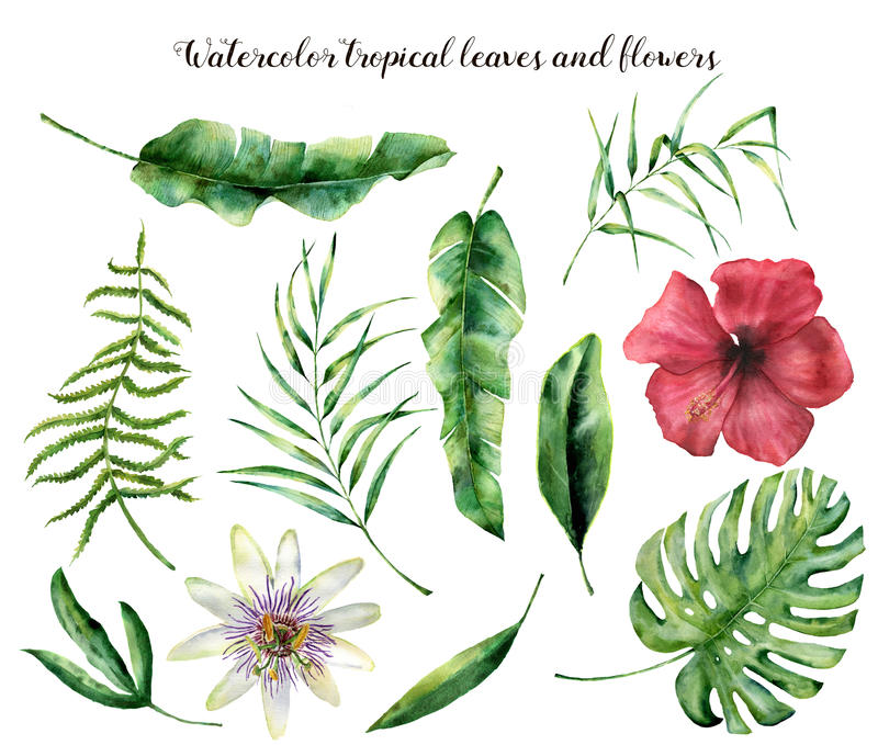 Watercolor set with tropical leaves. Hand painted palm branch, fern and leaf of magnolia. Tropic plant isolated on white. Background. Botanical illustration royalty free illustration