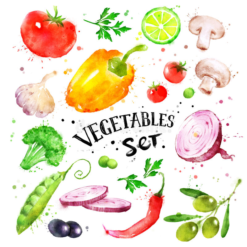 Watercolor set of vegetables. Hand drawn watercolor colorful set of vegetables with paint splashes stock illustration
