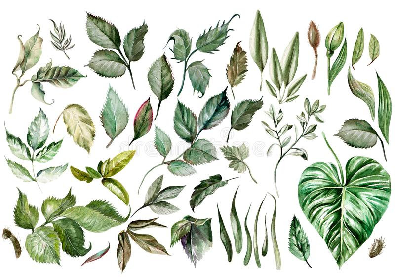 Watercolor set. Wild forest. Leaves. royalty free illustration