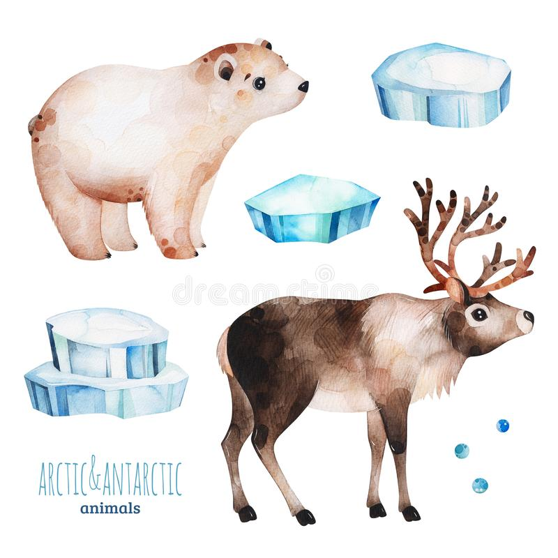 Free Watercolor Set With Cute Polar Bear And Reindeer Royalty Free Stock Photos - 158686908