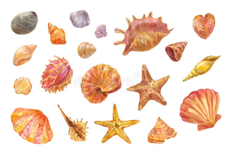 Watercolor shells isolated on white. Set of hand-drawn element. Hand-drawn shells. Set of watercolor seashells, starfishes and conches. Drawings suitable for royalty free illustration