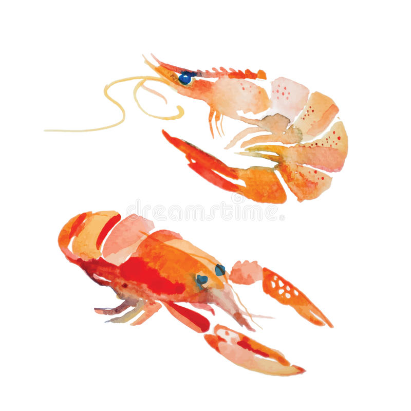Watercolor shrimp. vector illustration