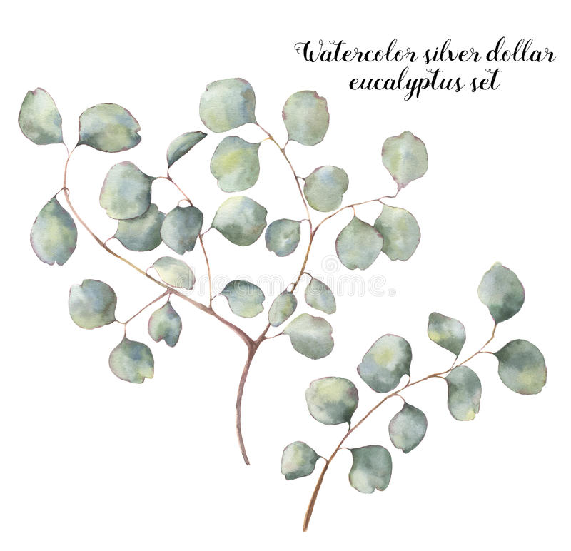 Free Watercolor Silver Dollar Eucalyptus Set. Hand Painted Floral Illustration With Round Leaves And Branches Isolated On Royalty Free Stock Photo - 88152595