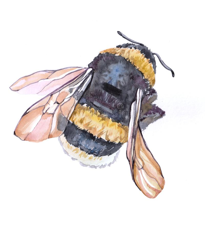 Watercolor single bumblebee insect animal isolated royalty free illustration