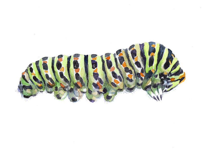 Watercolor single caterpillar insect animal. Isolated on a white background illustration stock illustration