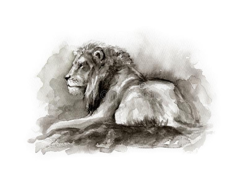 Watercolor sketch of lion royalty free stock image