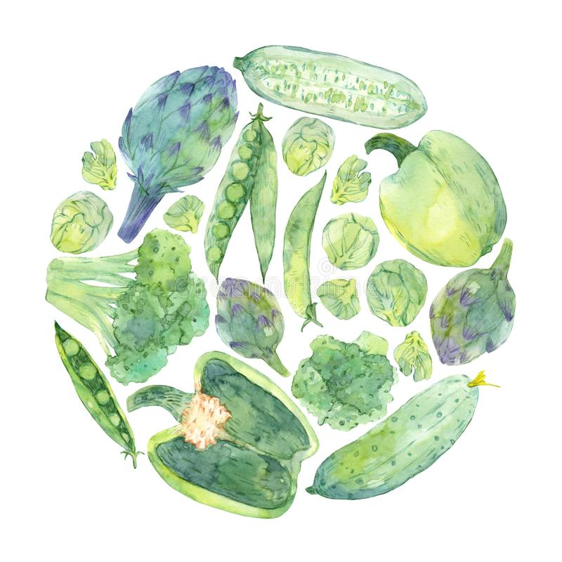 Watercolor sketching of fresh green vegetables in circle. Hand painted elements isolated on white background. Artichoke, cucumber, broccoli, peas, pepper stock illustration