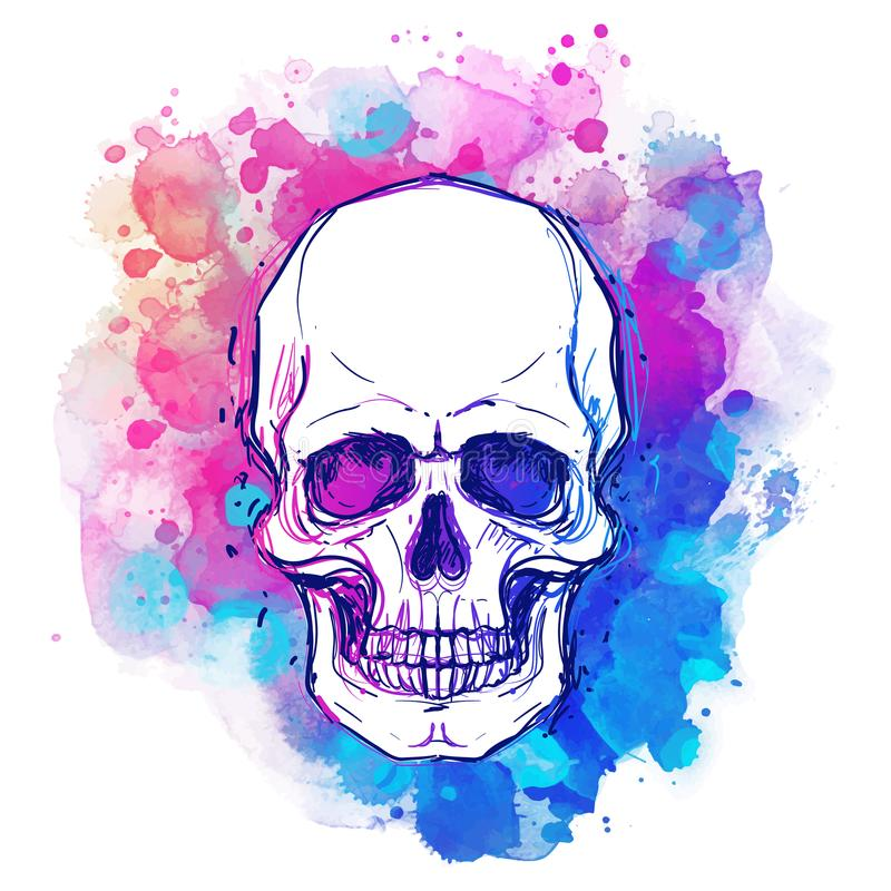 Watercolor sketchy skull with red, blue and purple colors isolated on white background. Vector illustration. Religion, death, occultism, calavera symbol vector illustration