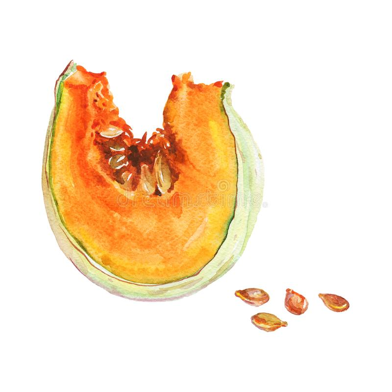 Watercolor slice of pumpkin royalty free illustration