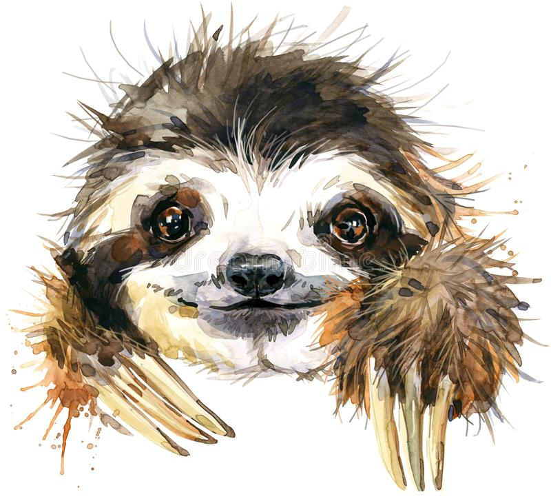 Watercolor sloth illustration. tropical animal. Watercolor sloth illustration isolate on white background. tropical animal royalty free illustration