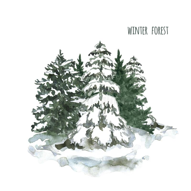 Watercolor snowy winter trees illustration. Pine trees with snow on branches. Winter forest landscape. Watercolor winter forest illustration. Snowy pine trees royalty free stock photo