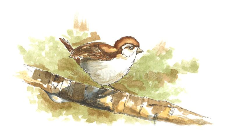 Watercolor sparrow bird on a tree branch with a little drop. Isolated on a white background stock illustration