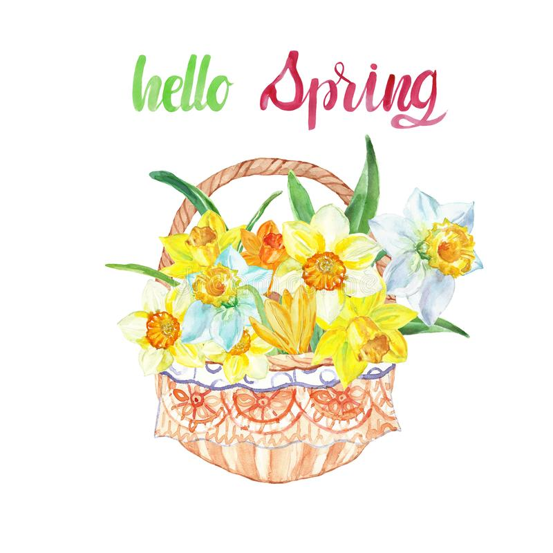 Watercolor spring daffodil flowers in a basket and text. Yellow floral decorative bouquet for easter cards royalty free stock photography