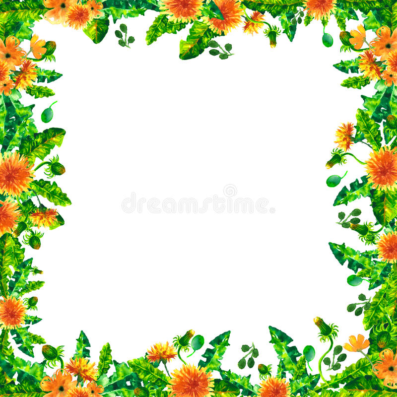 Watercolor Spring dandelion flowers, blossoms square frame isolated on white background. vector illustration